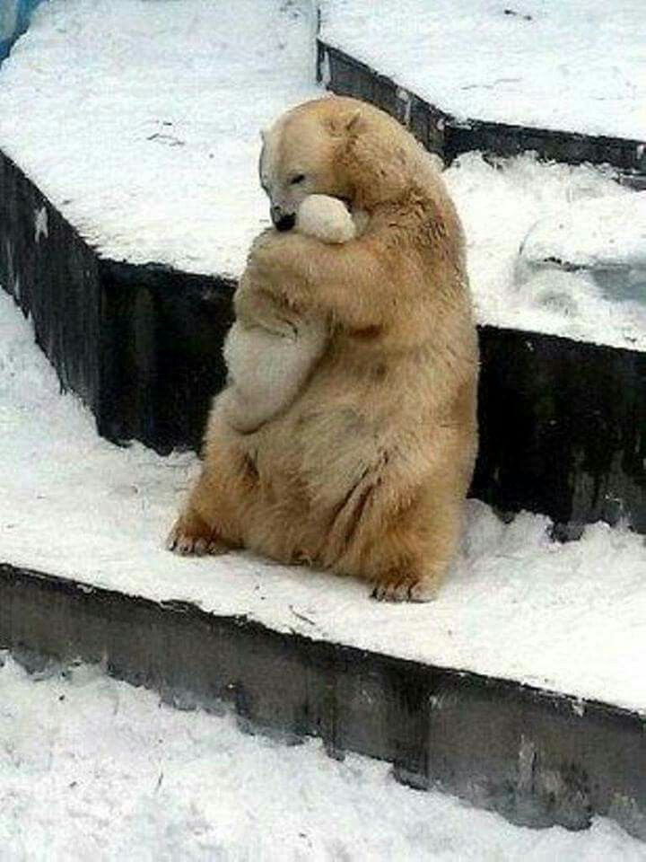Beautiful, Bear love