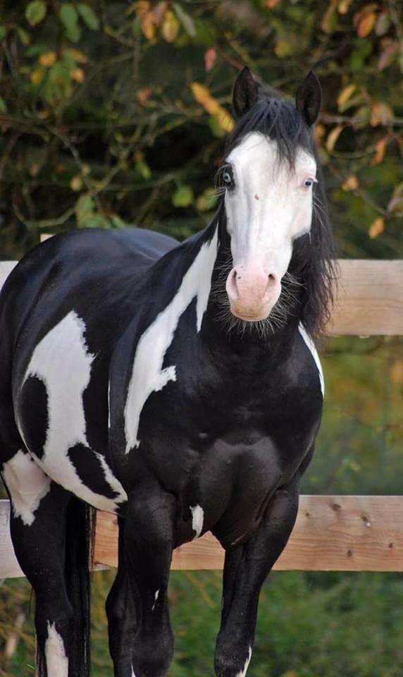 Unusual  markings, cool horse eyes! (95) Horseaddict - Photos
