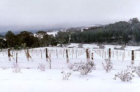Orange: The cool-climate wines produced from the region's high altitude represent a fresh new offering to NSW Wine. 