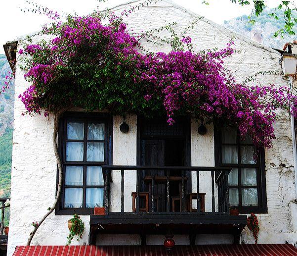Kaş, Turkey bougainvillea in purple over verandah