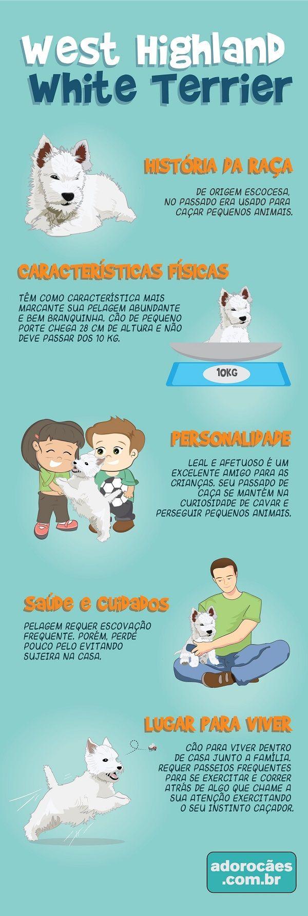 West Highland White Terrier: história da raça, características físicas, personalidade, temperamento, saúde e cuidados, lugar para viver