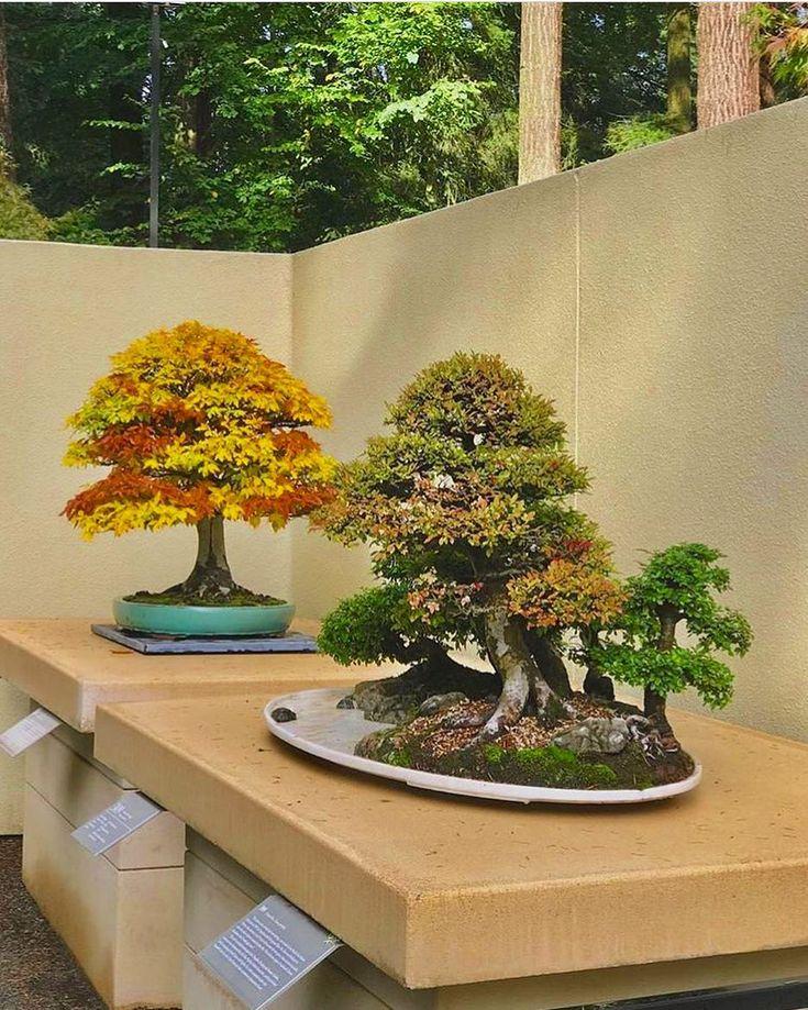 Best 25+ Bonsai Garden Ideas On Pinterest