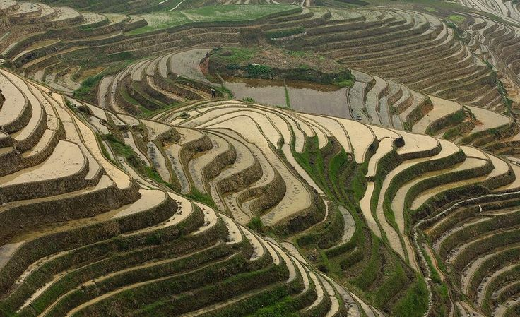 76/365. Longsheng rice terraces. Can you find the person?
