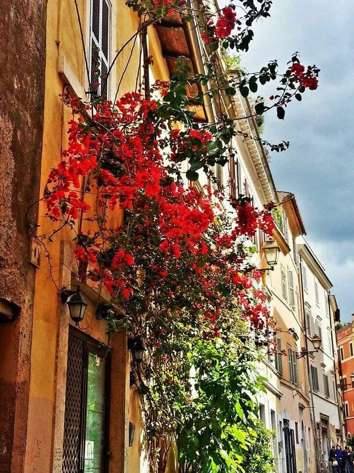 Vicolo bologna #redflowers