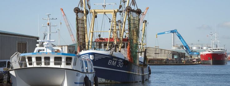Brighton and Newhaven Fish Sales