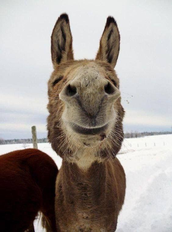 Happy! Donkey, I think.