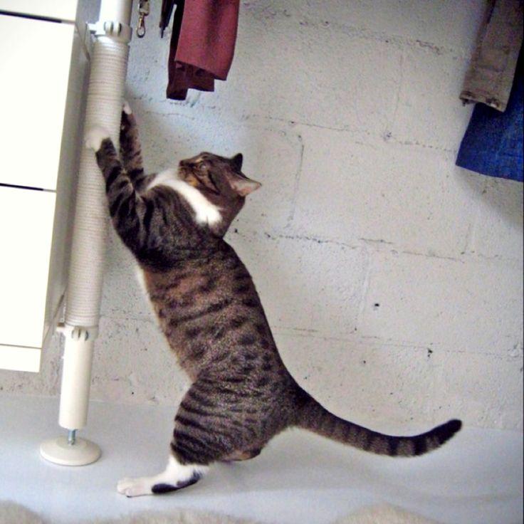 Scratch! Scratch!