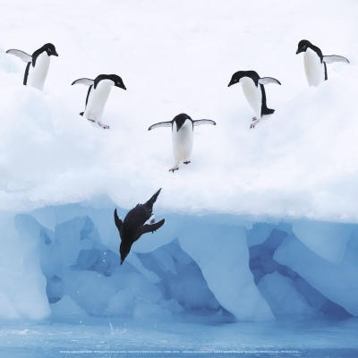 245 best images about Animals: Penguins on Pinterest | Animals and ...
