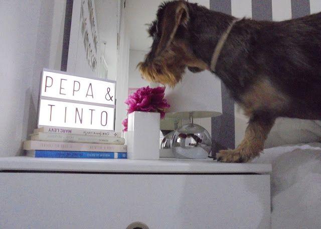 Con Perros y a lo loco: Caja de luz