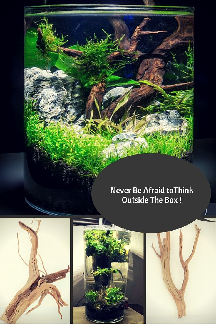 Its Time To Think Outside The Box, Beautiful Aquascapes Can Be Designed In  Non Tradition
