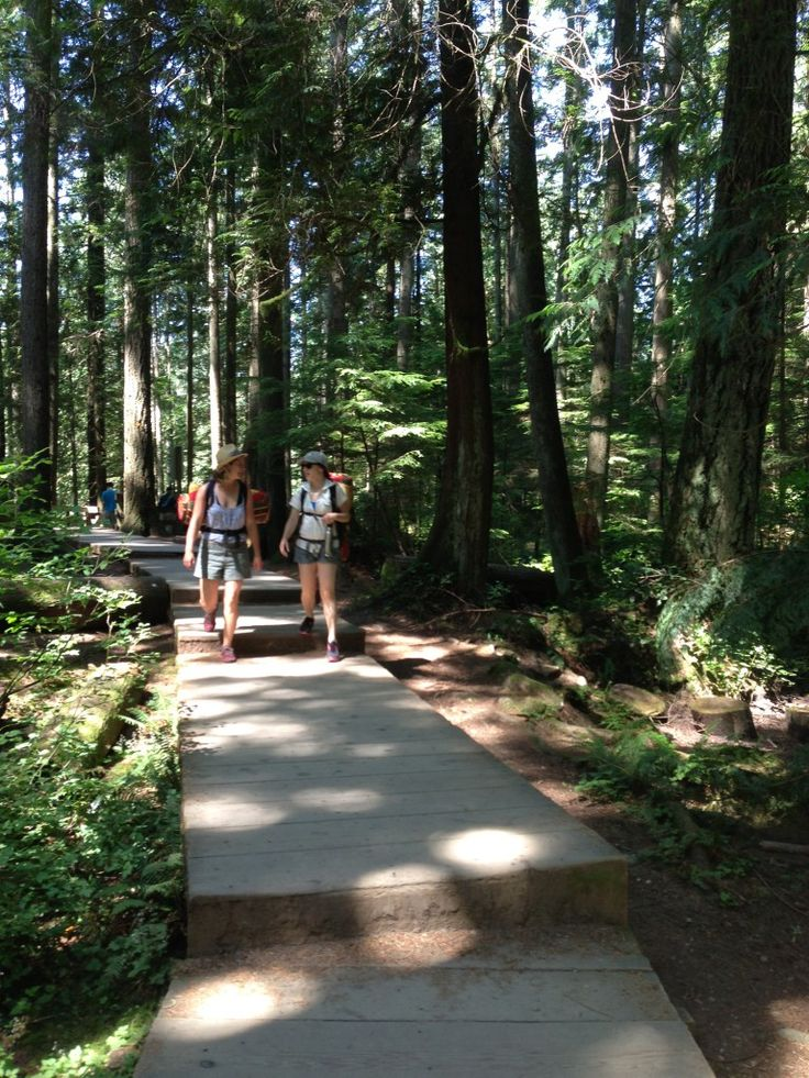 Walking to boardwalk along the Baden Powell trail in North Vancouver. - Leah Poulton