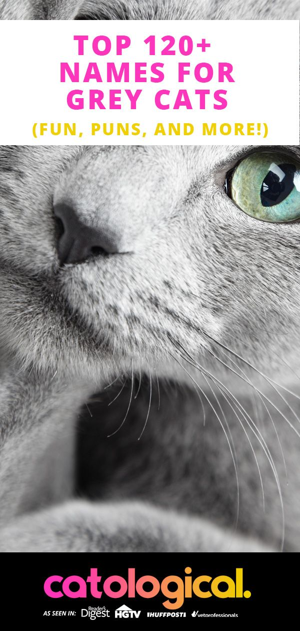 Top 120+ Names For Grey Cats (Cute, Funny, Unique, Puns