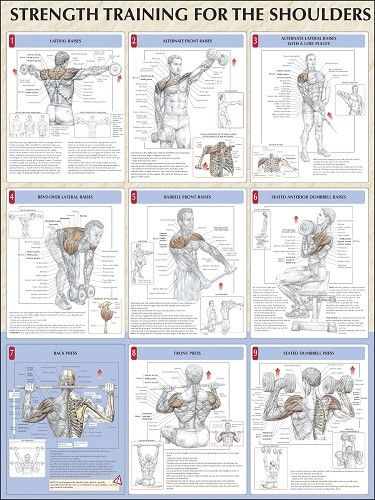 Institute of Health & Fitness - Strength Training Anatomy Posters
