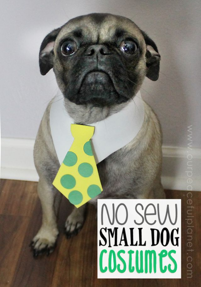 small dog halloween costume u0026 patterns