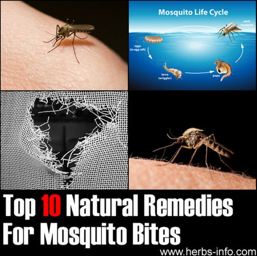 Top 10 Natural Remedies For Mosquito Bites...http://homestead-and-survival.com/top-10-natural-remedies-for-mosquito-bites/