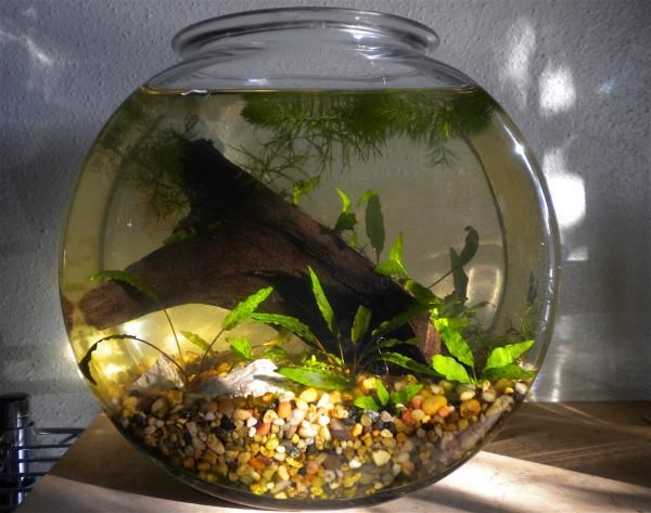 Best 25 Pond Snails Ideas On Pinterest Snails Snail And Snails In Garden