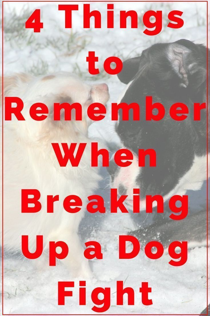 4 Things to Remember When Breaking Up a Dog Fight   Dog Training Tips   Dog Obedience Training   Dog Aggression Signs   Stop Dog Aggression   http://www.dogtrainingadvicetips.com/4-things-remember-breaking-dog-fight #DogObidience