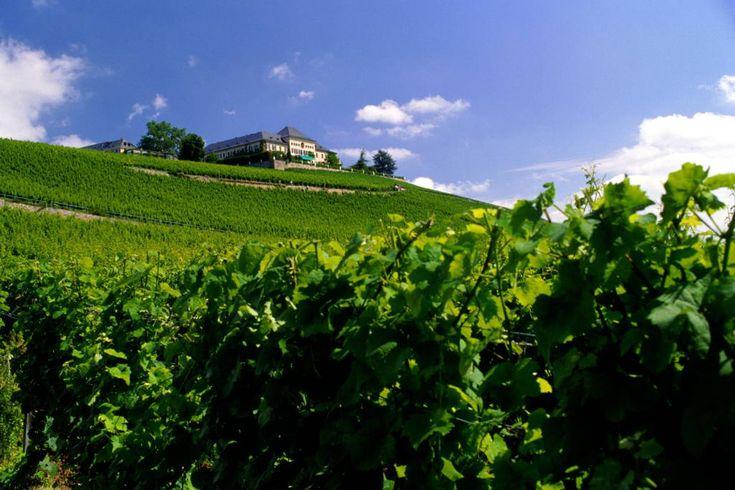 Rheingau Laadun perinteet  Rheingaun sydän rajoittuu Reiniin, joka kulkee itä-länsisuunnassa Wiesbadenista Rüdesheimiin. Siellä jalot Riesling- ja Spätburgunder (Pinot Noir) -viiniköynnökset peittävät Taunus-vuorten rinteet.