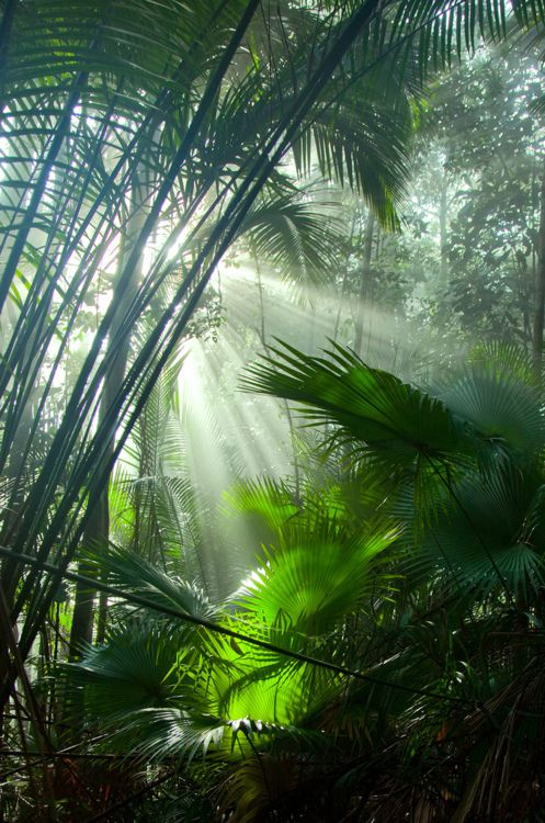 Rainforest - hike in rainforest | World | Inspiration | Wanderlust | Globe | Earth | Travelling | Adventure | Nature #nakedenvironment