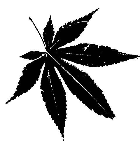 Learning to Identify Trees? Let These Leaf Silhouettes ...