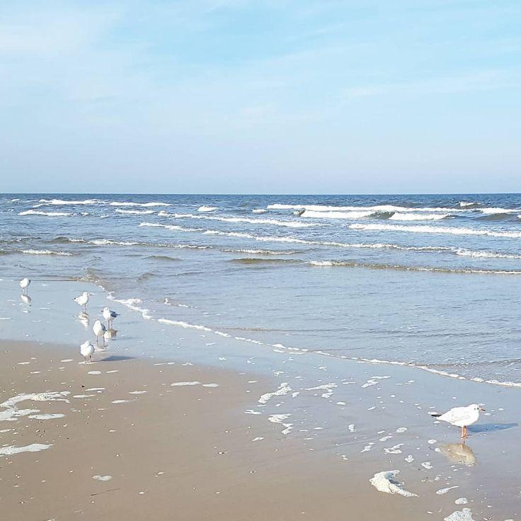 Herbst an der Ostsee: Möwen und Wellen #Usedom