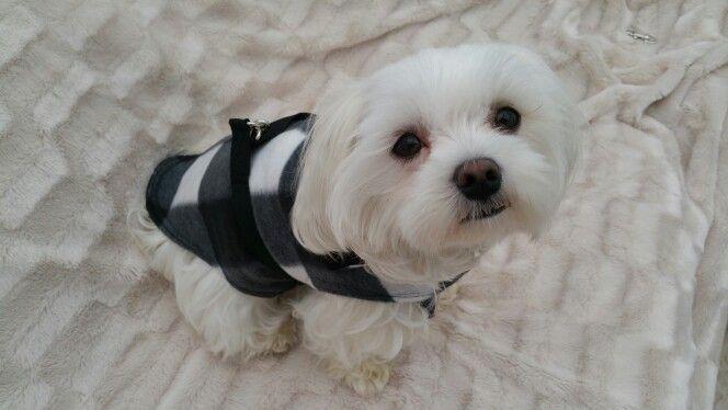Black and white check cashmere