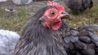 Shift Production Manager £45,000 (4am - 1pm, 6 days) (Meat / Poultry) (Birmingham) http://myjobboardltd.com/display-job/2191873/Shift-Production-Manager-(4am---1pm,-6-days)-(Meat---Poultry)-(Birmingham).html