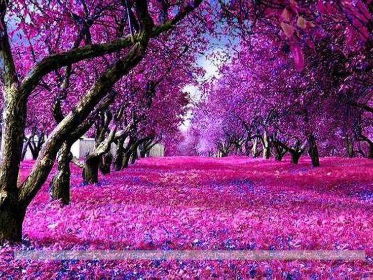 Sakura Falling Live Wallpaper Downloads 25 Unique 3d Nature Wallpaper Ideas On Pinterest Hd