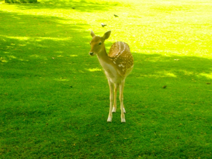 Bambi is alive