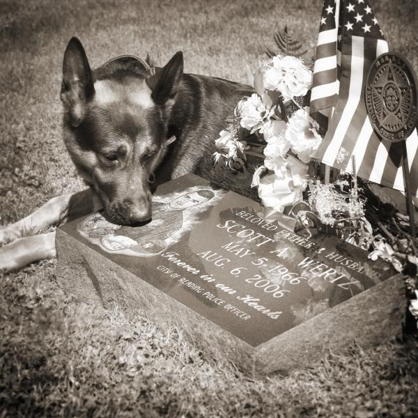 This image features K9 Rocky laying next to the grave marker of Officer Scott Wertz who died in the line of duty Aug. 6th, 2006. This photo brings our efforts full circle, as Officer Wertz was the inspiration for the return of the K9 Unit to Reading PA. ALL PROCEEDS OF THE PRINT PURCHASE (excluding framing costs) WILL BE DONATED TO THE FRIENDS OF THE READING POLICE K9 UNIT.