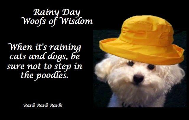 Dogs Rainy Day Quotes