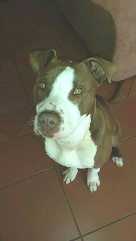 Dax 6 months old