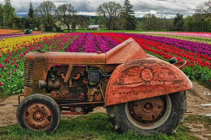 Old Case tractor in Woodburn Oregon, at the Tulip farm.