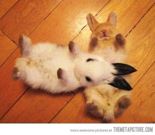 Oh my gosh it doesnt get much cuter than this!