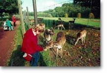 Hardegsen Wildpark. Honden ?. 45 minuten van Kassel. Inkom gratis.