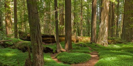 22 Best Images About Henry Cowell Redwoods Sp On Pinterest