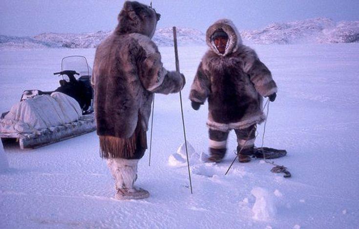 Учёные снова заявили, что в Арктике не будет льдов к2100 году, сообщилсайтНВ со ссылкой на издание Seeker. Уже через 80 лет эскимосы (инуиты) и другие северные народы останутся без привычных мест для жительства, где они могли размещать юрты. #nature #Arctic #погода #глобальноепотепление #Арктика #белыемедведи #песцы #семга #почитать #природа #wwf #teens #teencorr
