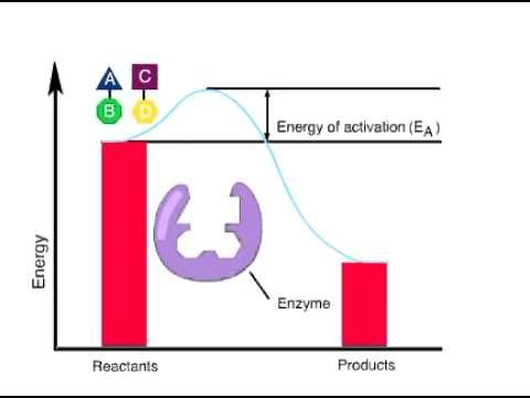 ENZYMES ACTIVATION ENERGY - YouTube