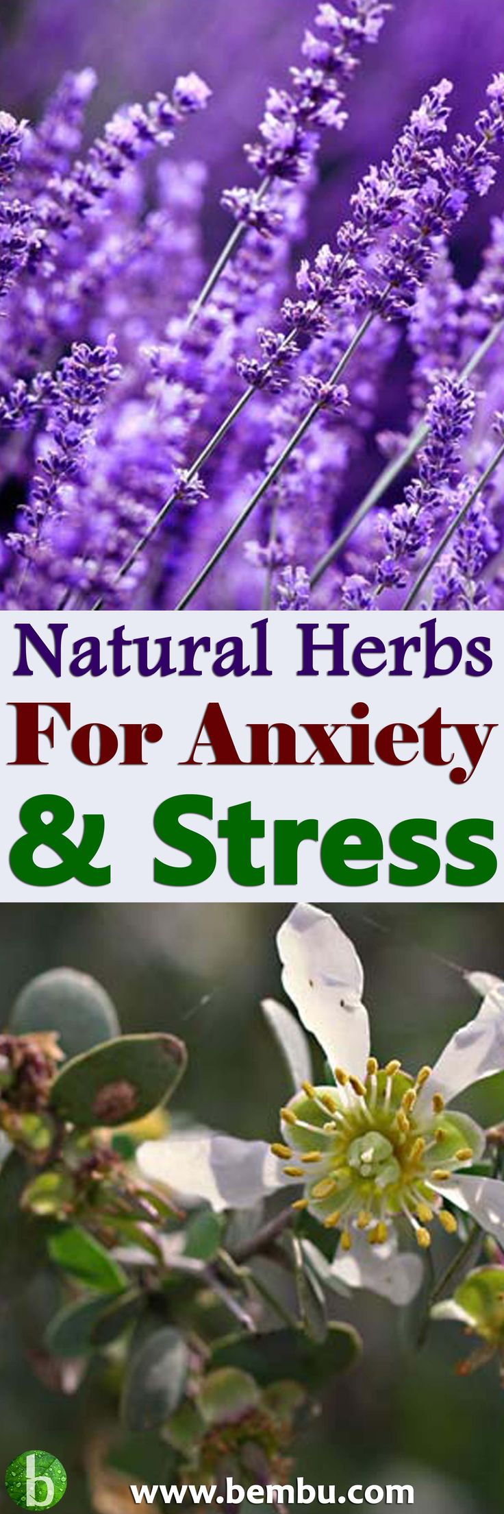 Using natural herb for anxiety is a great alternative to treating it with prescription medication... Health Tips │ Health Ideas │Healthy Food │Health │Food │Vitamin │Healing │Natural Remedies │Nutrition │Natural Cure │Herbal Remedies │Natural beauty #Health #Ideas #Tips #Vitamin #Healthyfood #Food #Vitamin #Healing #Remedies #Nutrition #Cure #Herbalremedies #Naturalbeauty