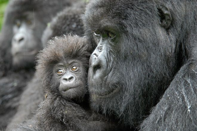 More Than Half of All Primates Threatened with Extinction January 19, 2017 10:33am E