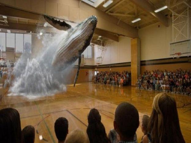Ikan paus tiba-tiba muncul dan melompat dari lantai gimnasium sekolah   Ikan paus tiba-tiba muncul dari lantai gimnasium sekolah  Bagaimanakeadaanya jika seekor ikan paus muncul dan melompat dari lantai tempat anda berdiri ia mungkin dilihat sesuatu yang mustahil tetapi sebenarnya situasi itu mampu diwujudkan dengan kepakaran teknologi terkini.  Situasi itu terjadi disebuah sekolah apabila pelajar-pelajarnya dikejutkan dengan kemunculan seekor paus dari lantai gimnasium sekolah mereka ketika…