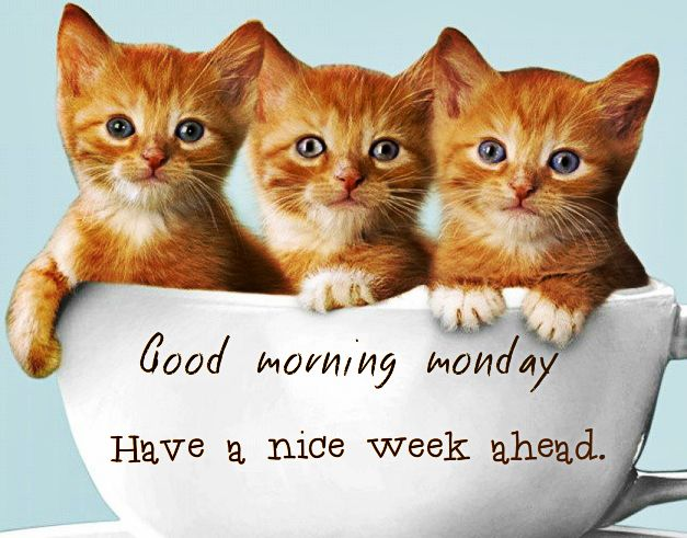 Image result for have a nice week ahead