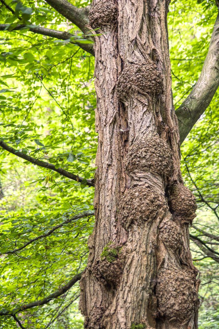 Baum in der Bittermark bei Dortmund