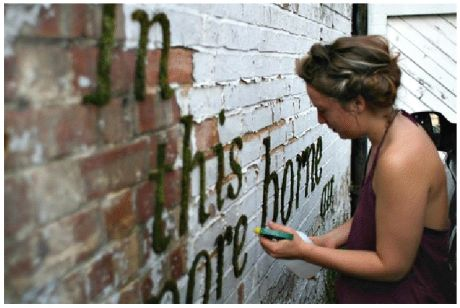 Put in blender: one can of cheap beer or 1 1/2 cups buttermilk, a few handfuls of moss, one teaspoon of sugar. Paint on wall and mist daily until it grows. 