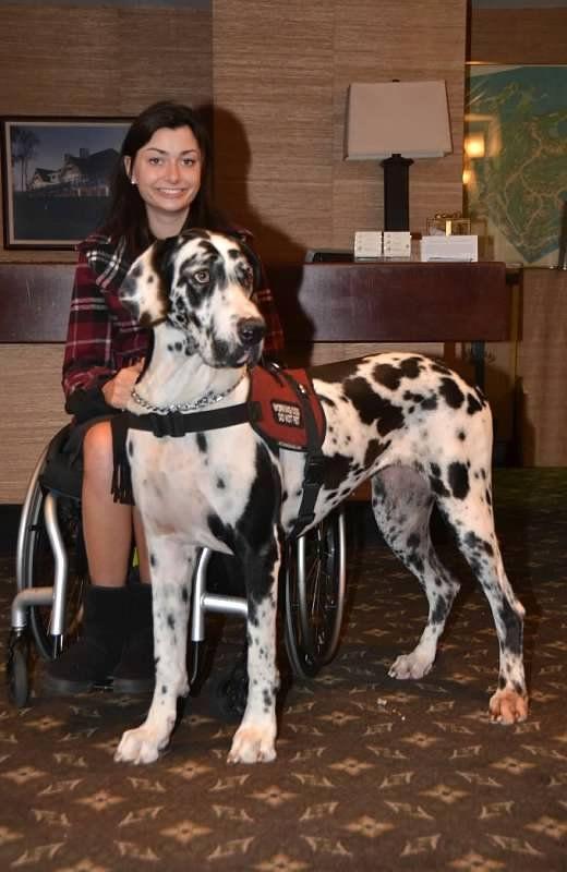 #Great #Dane Service Dog | dogs | Pinterest | Service dog ...