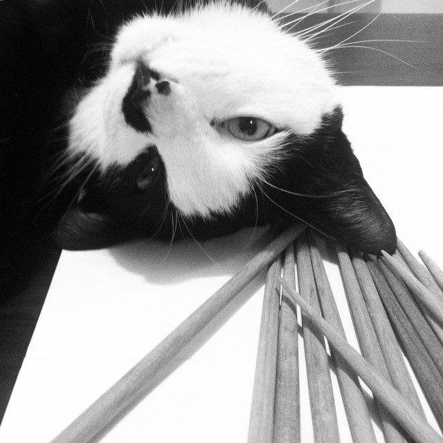 Remy and chopsticks