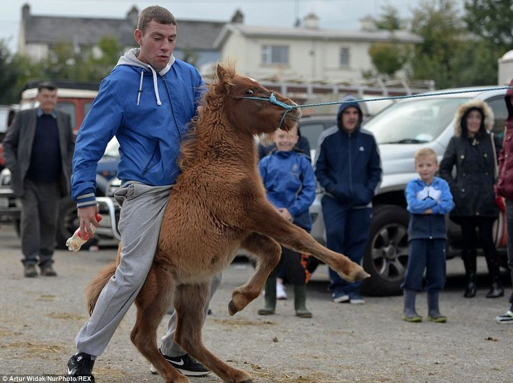 A group of youngsters play with one of the horses at the fair, which has been held in the ...