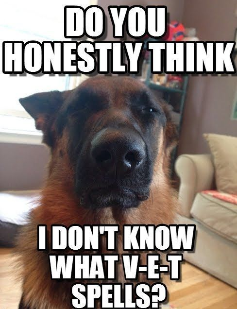 visit www.amazingdogtales.com for the best funny dog joke pics,inspirational dog stories and dog news.... Because I do!