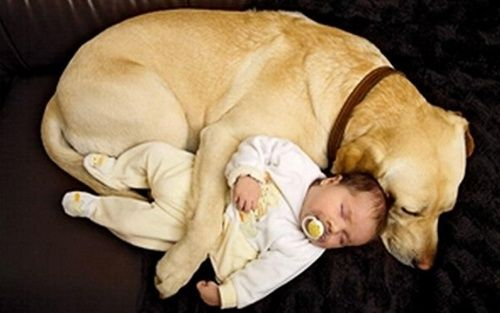 6-year old explaining why dogs have shorter lives than humans : ''People are born so that they can learn how to live a good life -- like loving everybody all the time and being nice. Well, dogs already know how to do that, so they don't have to stay as long.'' SO SWEET, so true <3