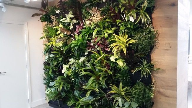 How to build a living wall - step by step | Good Magazine